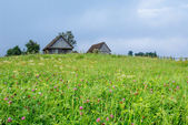 Grass field in the mountains  — Stock Photo