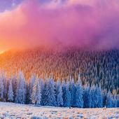 Winter landscape trees in frost  — Stock fotografie