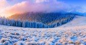 Vinter landskap träd i frost — Stockfoto