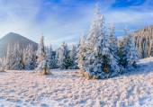 Magiska vinter snö täckta träd — Stockfoto
