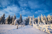 Winter landscape trees in frost  — Stock Photo
