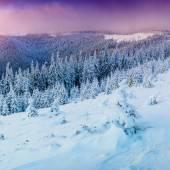Winter landscape trees in frost  — Foto de Stock