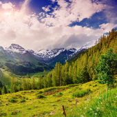 Magnificent view of the Alps — Stock Photo