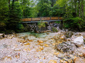 Turbulent river through the woods  — Stock Photo