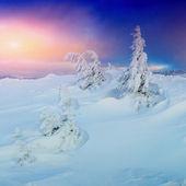 Sunny winter landscape — Stock Photo