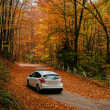 Car on a forest path — Stock Photo #63744983