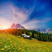 Flower meadow in the Alps at sunset — Stock Photo