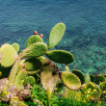 Thorny cactus near the sea — Stock Photo #69325561