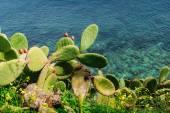 Thorny cactus near the sea — Stock Photo