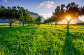 Green lawn and rays breaking through the trees at sunset. — Stok fotoğraf