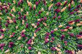 Field of wild flowers. — Stock Photo