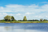 Lake with cane — Stock Photo