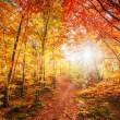 Forest Road in the autumn. Autumn Landscape. — Stock Photo #80638426