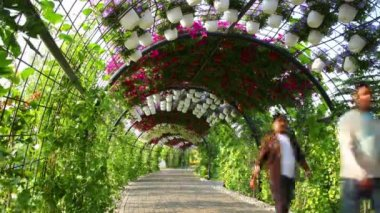 Flowers road at Dubai miracle garden — Stock Video