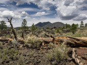 Sunset Crater Volcano National Monument lava flow — Stock Photo