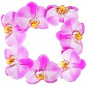 Orchid Flowers Frame isolated. Hot Pink Flowers — Stockfoto
