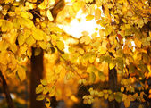 Yellow autumn leaves. Fall background — 图库照片