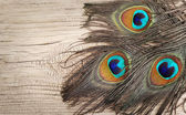 Peacock feathers on old wooden board — Stock Photo