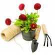 Red daisies and garden tools — Stock Photo #68932781