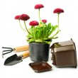 Red daisies and garden tools — Stock Photo #68932815