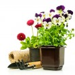 Pansies and daisies in pots with garden tools — Stock Photo #68932879