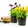 Colorful pansies  in pots with garden tools — Stock Photo #68932935