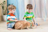 Children boys feeding red cat — Stock Photo