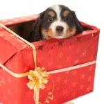 Christmas surprise doggy — Stock Photo #52742457
