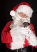 Christmas jack russel — Stock Photo