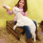 Постер, плакат: Feeding milk to a hungry little baby goat