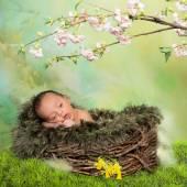Springtime newborn baby — Stock Photo
