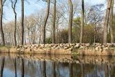 Rural Flanders in Belgium — Stock Photo