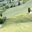 Tuscan road and cypress trees — Stock Photo #70577503