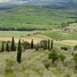 Olive trees in Tuscany — Stock Photo #72235285