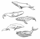 Hand drawn whales — Stock Vector