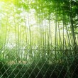 High Bamboo forest — Stock Photo #60524713