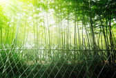 High Bamboo forest — Stock Photo