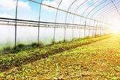 Plastic greenhouses — Stock Photo
