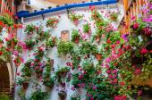 The Courtyards of Cordoba, Intangible Heritage of Humanity — Stock Photo
