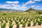 Vineyards at La Rioja (Spain) — Stock Photo