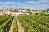 Vineyard at Saint-Emilion, France — Stock Photo