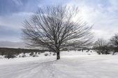 Beech tree, Entzia mountain range in winter (Spain) — Stock Photo