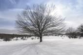 Beech tree, Entzia mountain range in winter (Spain) — Zdjęcie stockowe