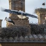 Storks in San Miguel Collegiate Church, Alfaro (Spain) — Stock Photo #67910729