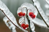 Freezing rain — Stock Photo