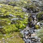 Small stream — Stock Photo #66352795