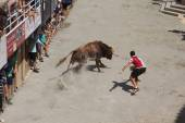 Segorbe, Spain. Festival of Bulls and Horses in the province of — Stock Photo