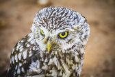 Cute little owl — Stock Photo