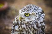 Cute little owl — Zdjęcie stockowe