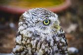 Cute little owl — Stockfoto